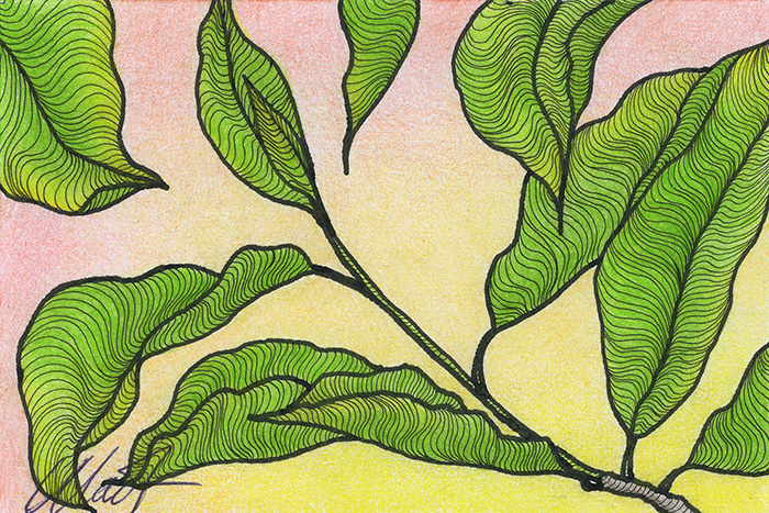 "Yelena Shabrova ~ A sketch a day: leaves in black and white ~ pen and ink and colored pencil on drawing paper, 6"" x 4"""