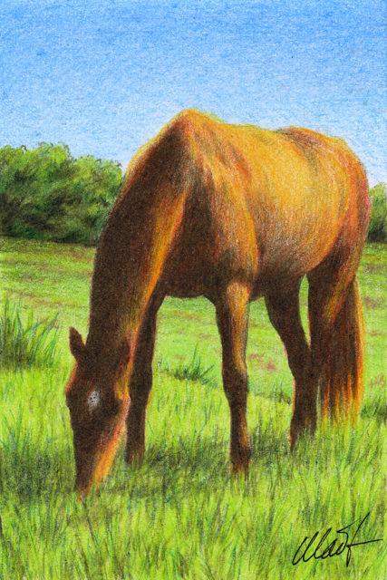 "Yelena Shabrova ~ A sketch a day: grazing horse ~ pastel pencil, 4"" x 6"""