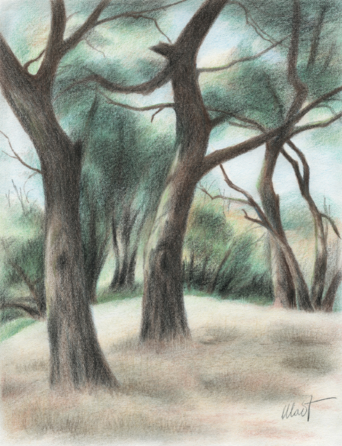 "Lexington Oaks - colored pencil on drawing paper, 6 .5 ""x 8.75"""