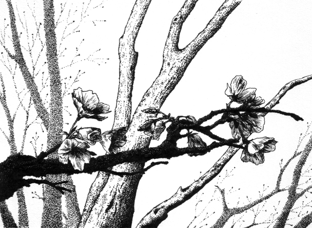 """New Spring I - pen and ink on drawing paper, 6.75"""" x 4.75"""""""