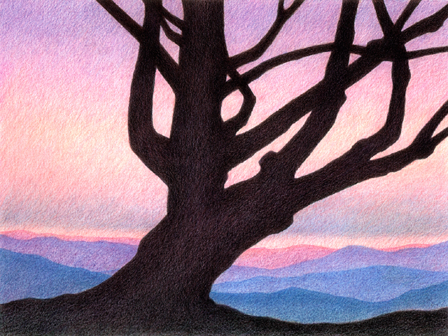 """Old Pine - colored pencil on colored paper, 11"""" x 8.5"""""""