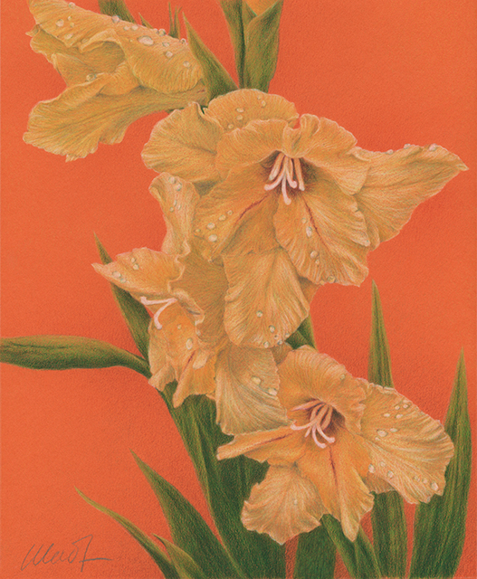 """Sun Kissed - colored pencil on colored paper, 8"""" x 10"""""""