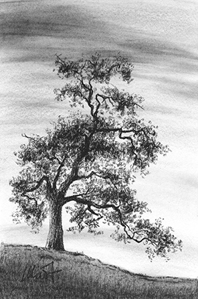 """The Old Oak - charcoal on drawing paper, 4"""" x 6"""""""