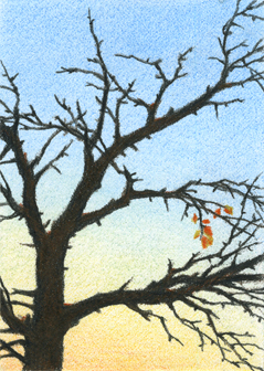 "Yelena Shabrova ~ last leaves - ATC ~ colored pencil, 2.5"" x 3.5"""