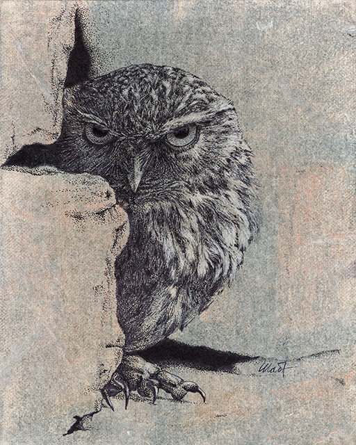 "Yelena Shabrova ~ Stranger ~ mixed media on canvas panel, 8"" x 10"" (original drawing of an owl)"