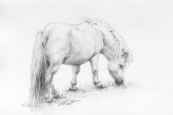"Yelena Shabrova ~ A sketch a day: grazing pony ~ graphite pencil on Canson drawing paper, 6"" x 4"""