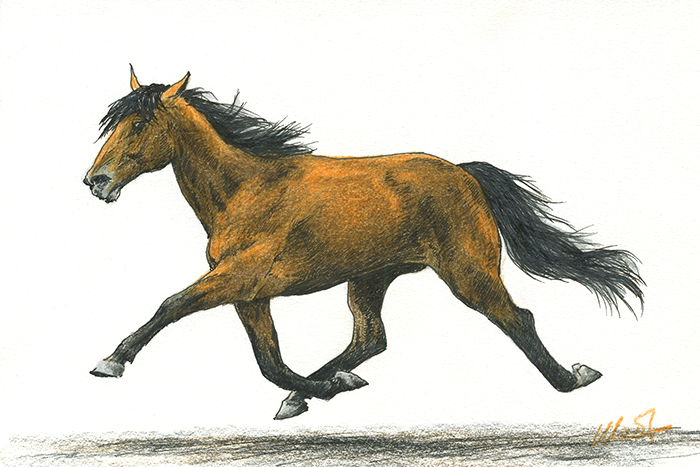 "Yelena Shabrova ~ A sketch a day: trotting horse ~ Faber-Castell colored pencil and ink on Canson drawing paper, 6"" x 4"""