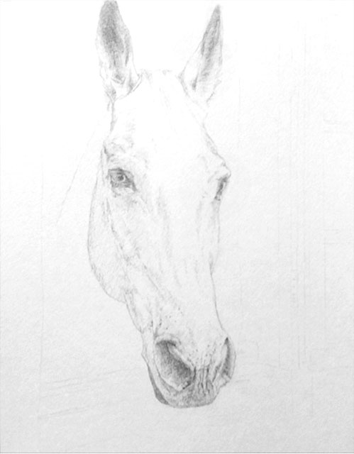 "Yelena Shabrova - Hello, drawing of a horse head in progress - colored pencils on Strathmore watercolor paper, 11"" x 14"""