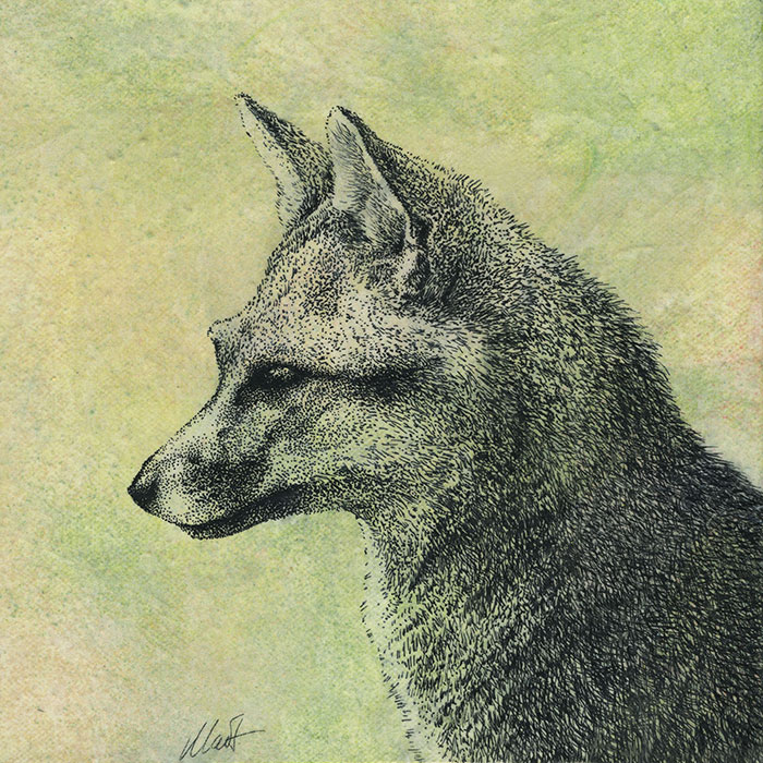 "Yelena Shabrova ~ Oregon Wildlife. Gray Fox ~ mixed media on canvas, 8"" x 8"""
