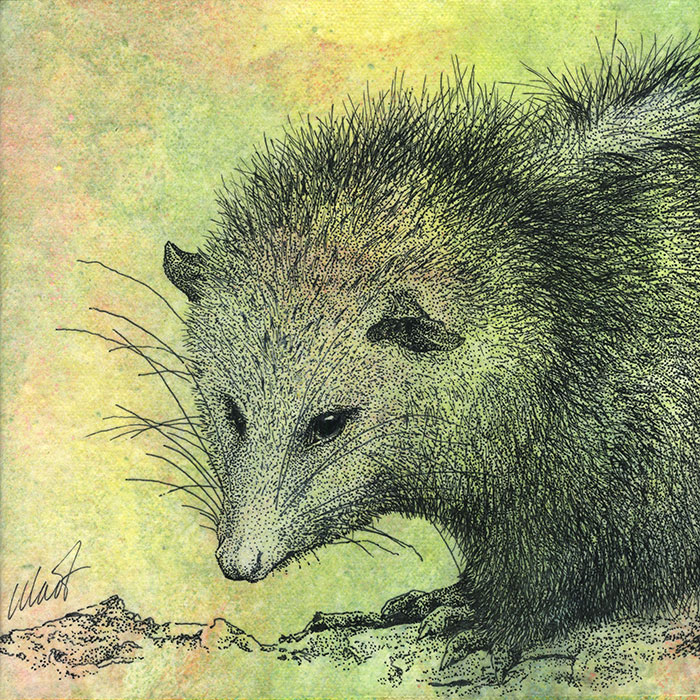 "Yelena Shabrova ~ Oregon Wildlife. Opossum ~ mixed media on canvas, 8"" x 8"""