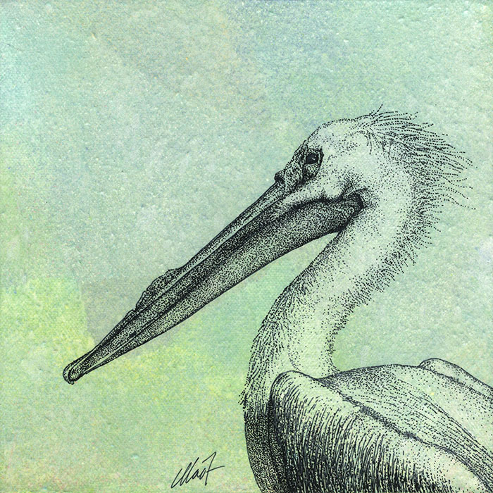 "Yelena Shabrova ~ Oregon Wildlife. White Pelican ~ mixed media on canvas, 8"" x 8"""