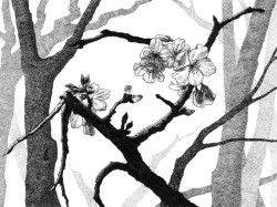 "Yelena Shabrova ~ New Spring II ~ pen and ink on drawing paper, 6.75"" x 4.75"""